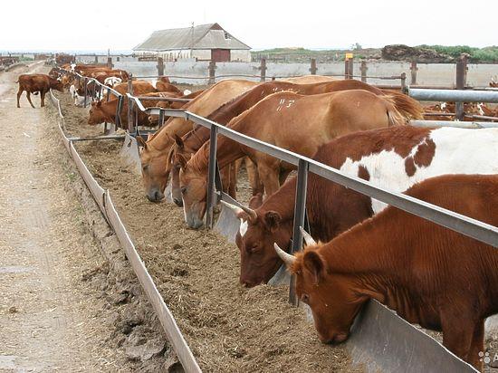 Донским фермерам, претендующим на гранты-2017, нужно поспешить
