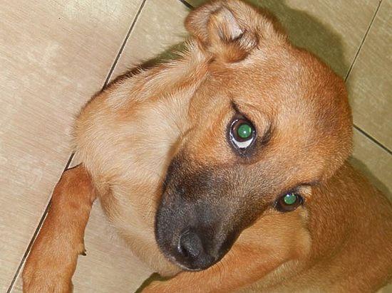Секрет ростовского пса распознает только металлодетектор