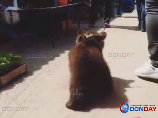 МВД неувидело нарушений впрогулке циркового медвежонка под Ростовом