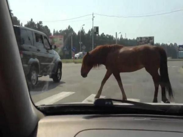 Один человек умер вДТП сучастием лошади вРостовской области