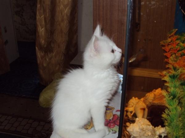 Нашли кота в ростове
